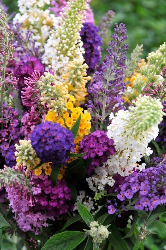 Bouquet of dark purple, light purple, yellow, pink and white blooms.