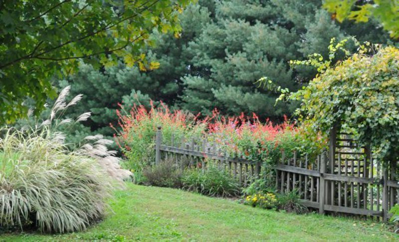 Red blooming plants shown along picket wood fence.