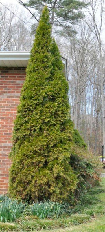 Mature green tree next to brick house.