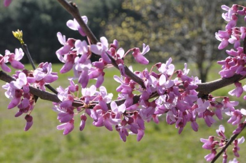 Delicate purple blooms on branch.
