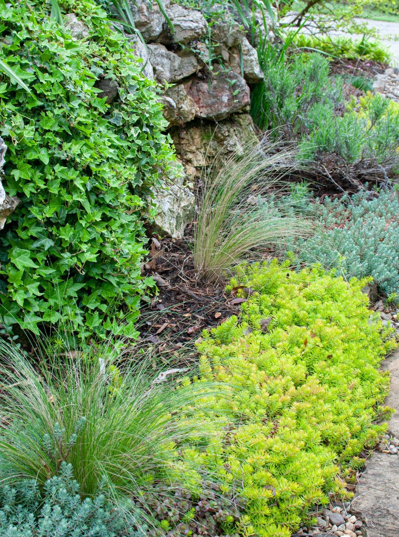 Bright green Sedum 'Angelina' lines edge of stone walkway
