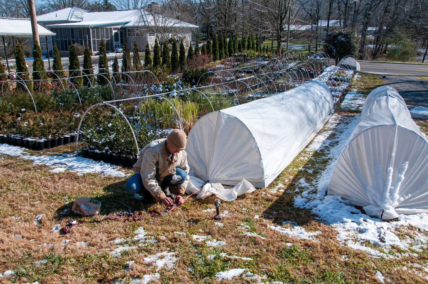 Young man staking down white plastic sheeting hoophouses amid scattered patches of melting snow