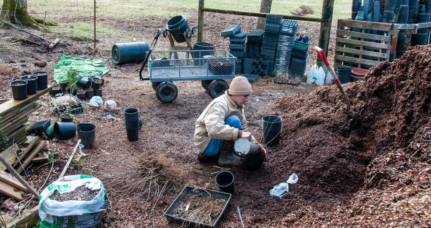 Young man in toboggan and coat at mulch pile potting up bare shrubs