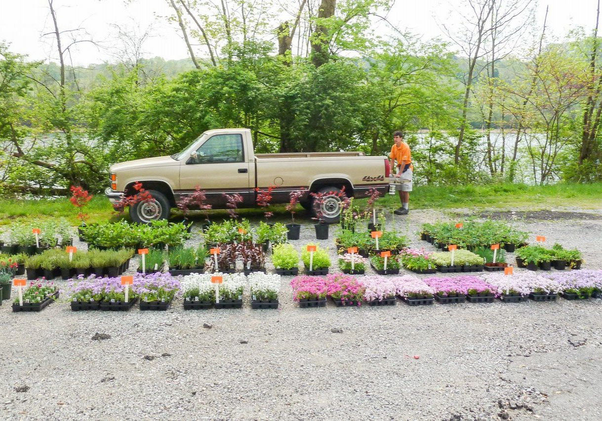 Young nusery owner at roadside sale with plants displayed on gravel in front of old brown truck