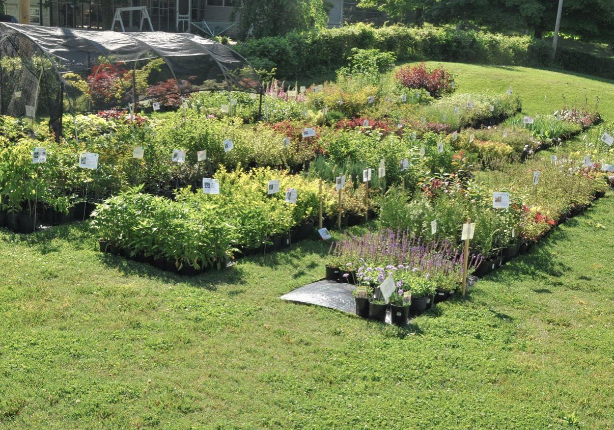 Small backyard nursery sale with four rows of shrubs and flowering perennials with information cards